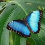 Casa delle farfalle: SOS alle istituzioni