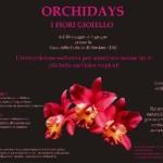 I misteri delle orchidee