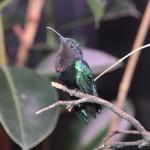 Il centro colibrì ha traslocato a Udine