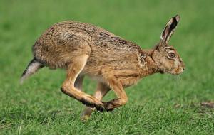 L'APPELLO DI FEDERCACCIA UDINE: «NON TOCCATE I PICCOLI ANIMALI»