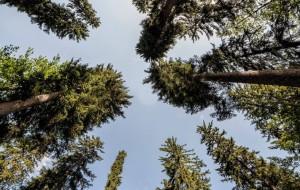 GESTIONE CONDOMINIALE PER LE FORESTE DELLA VAL CANALE?