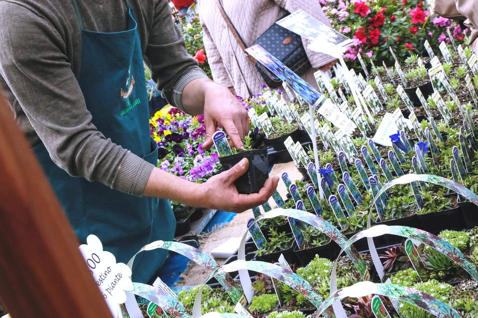 1639661_00000001_piante_fiori_pollice_verde_gorizia