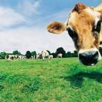 AGRICOLTURA: REGIONE VENETO FINANZIA IL CREDITO A BREVE
