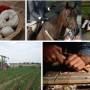 ATTIVITÀ EXTRA-AGRICOLE IN AREE RURALI: BANDO IN VENETO PER 6 MILIONI DI EURO