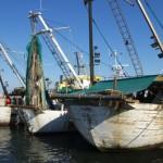 PESCA IN VENETO: NEL 2017 FONDI INCREMENTATI DEL 71 PER CENTO