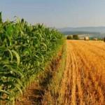 AGRICOLTURA VENETA: AVEPA SECONDO ENTE IN ITALIA PER VELOCITÀ DI PAGAMENTO