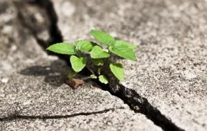 URBANISTICA IN VENETO: UN PROVVEDIMENTO  STABILISCE LA QUANTITÀ MASSIMA DI CONSUMO DEL SUOLO