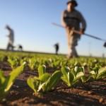 AGRICOLTURA VENETO: COSTITUITO CONSORZIO PER 'QUALITÀ VERIFICATA'