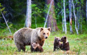 UN PARCO FAUNISTICO ALPINO IN CARINZIA CON DECINE DI ANIMALI E TRE MUSEI…