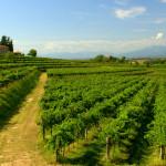 SUSGRAPE: AGRICOLTURA SOSTENIBILE E TECNOLOGICA