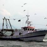Pesca veneta in chiaroscuro, segni negativi ma cresce  numero  aziende
